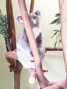 Featherdale Wildlife Park in the Blue Mountains (2)