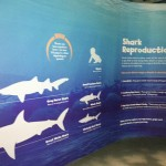 Shark Education at the Sydney Aquarium